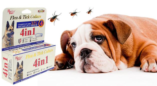 Súťaž o 5 antiparazitných obojkov pre psy a mačky