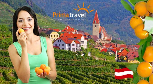 Marhuľové slávnosti a nádherné údolie Wachau - jednodňový zájazd s CK Prima Travel