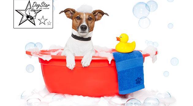 Wellness a strihanie pre psy v psom centre Dogstar
