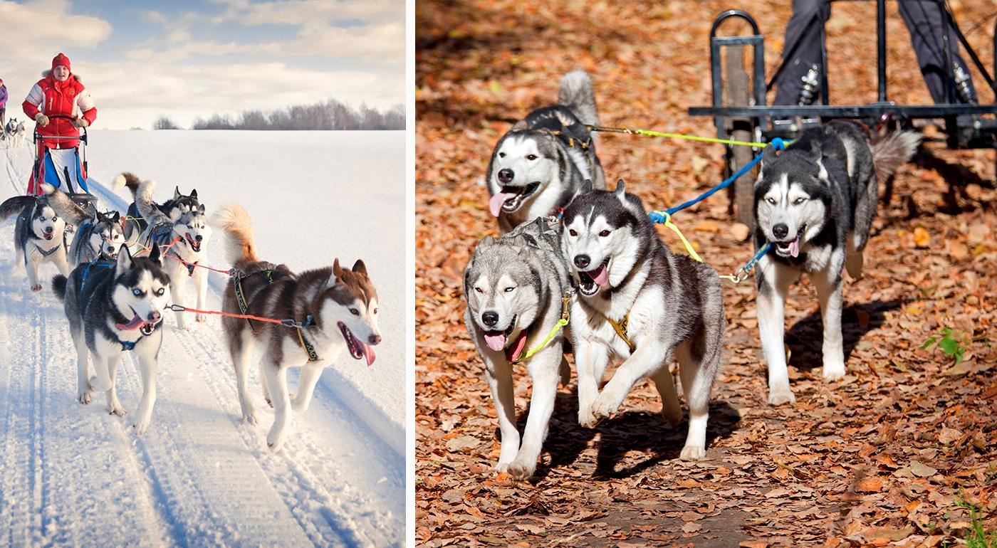 Skvelá adrenalínová jazda so psími záprahmi za super ceny!