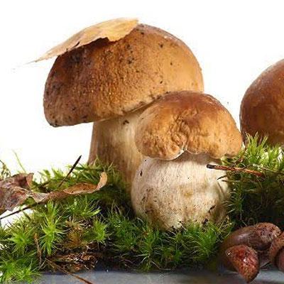 Balenie semiačok húb - mix 8 druhov (10g) - hríb hnedý, hríb smrekový, rýdzik pravý, kozák brezový, kozák osikový, masliak obyčajný, vatovec obrovský, hliva ustricová