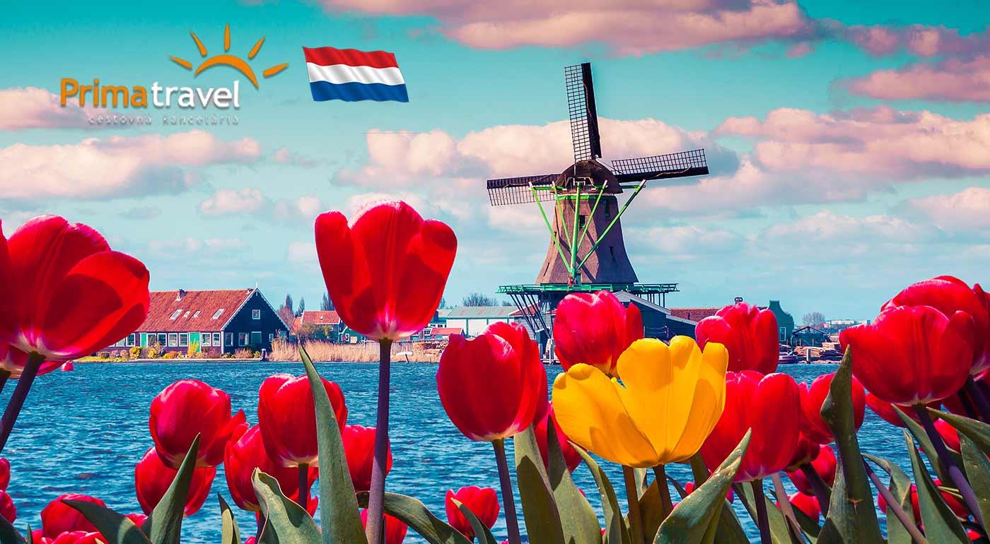 Spoznajte krajinu veterných mlynov - Holandsko - v rámci 4-dňového zájazdu