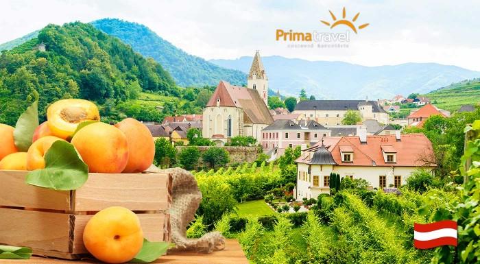 Fotka zľavy: Spoznajte nádherné rakúske údolie Wachau zaradené do zoznamu UNESCO a zažite jedinečné marhuľové slávnosti s množstvom špecialít - jednodňový zájazd s dopravou autobusom a sprievodcom!