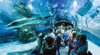 Zľava 26%: Budapešť ukrýva mnohé poklady - jedným z nich je aj najväčšie morské akvárium v Strednej Európe. Urobte si selfie so žralokmi, rajou či aligátorom a vyberte sa na skvelý poznávací zájazd.