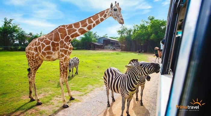 """Fotka zľavy: Vydajte sa v ústrety africkému Safari dobrodružstvu a urobte si výlet do Safari ZOO Dvůr Králové. Počas jednodňového zájazdu navštívite aj slávne """"Babičkino"""" údolie a zámok Ratibořice."""