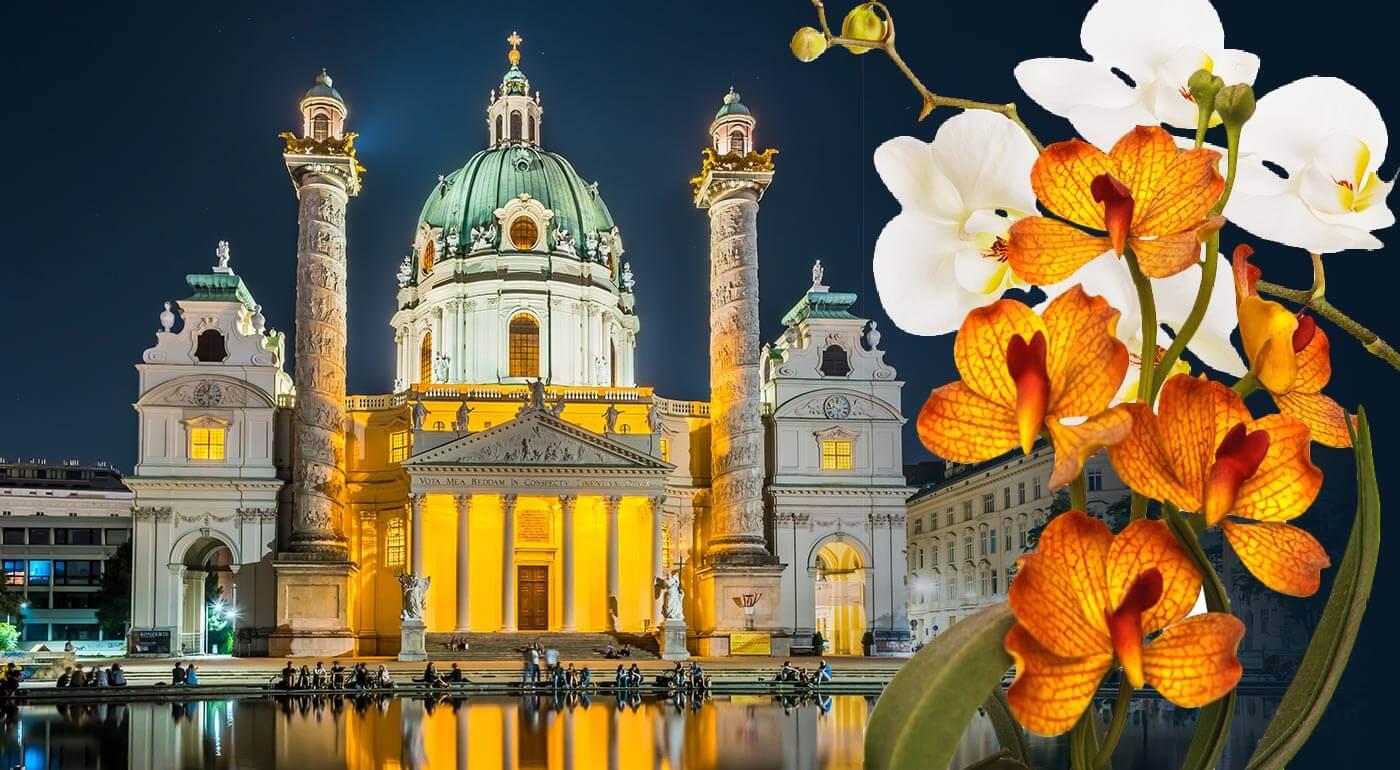 Viedeň: zájazd na výstavu orchideí a tillandsií, ktorý vám do života vnesie kus exotiky