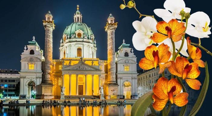 Fotka zľavy: Viedeň: výstava orchideí a tillandsií