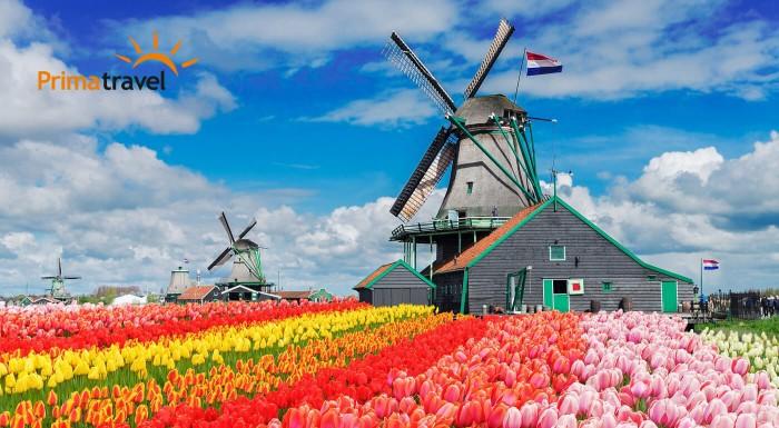 Zľava 19%: Krajina tulipánov, veterné mlyny, syry, klopkajúce dreváky, záplava kvetov na výstave Keukenhof a večerná plavba Amsterdamom. To všetko zažijete na 4-dňovom zájazde s CK Prima Travel!