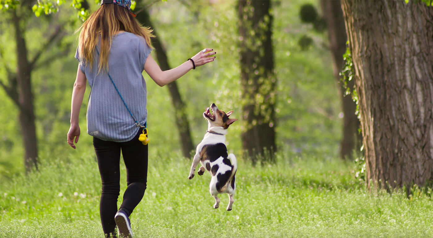 Kvalitné loptičky pre psy - rôzne druhy a prevedenia