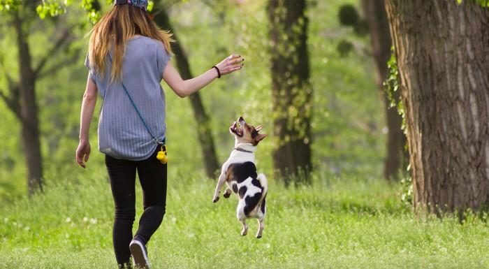 Loptičky na hranie pre psy
