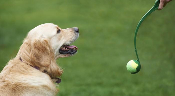 Hádzač loptičiek pre psov