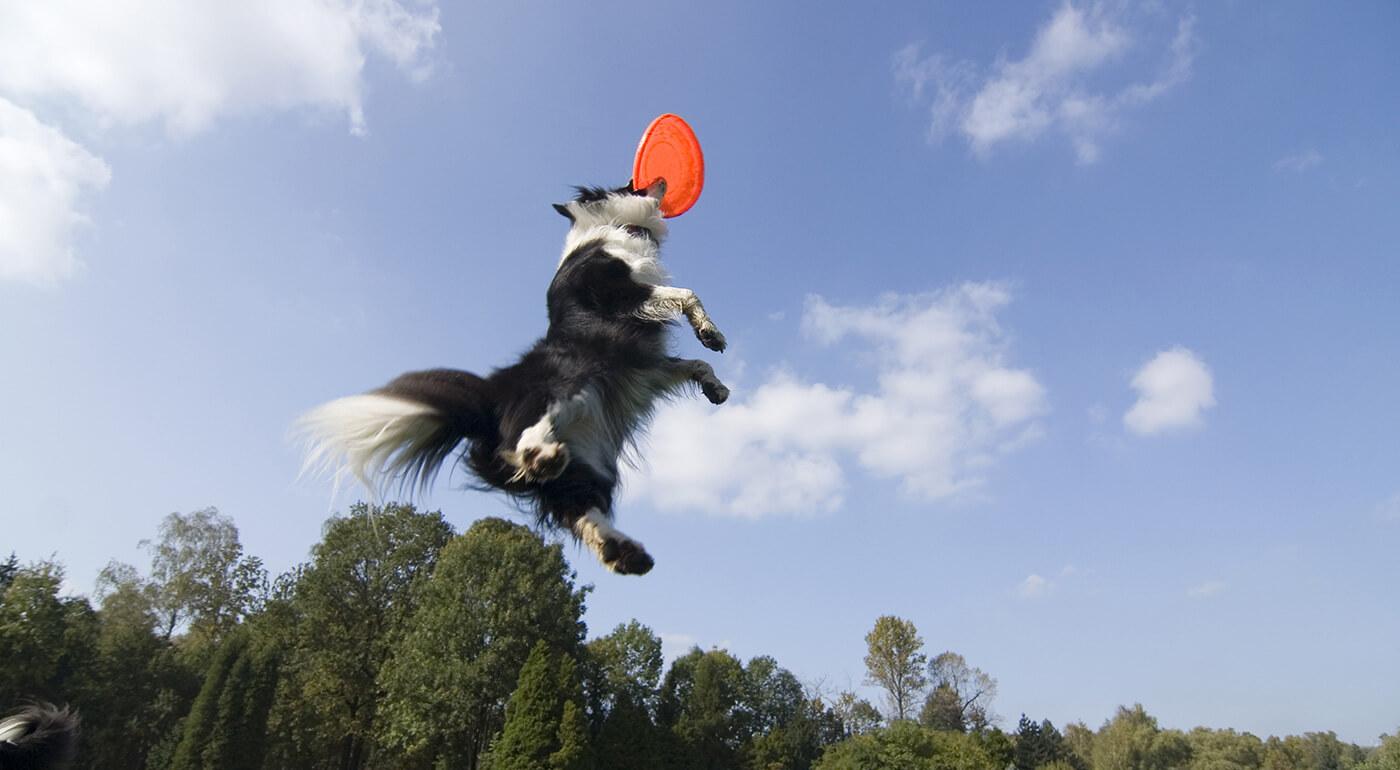 Zábavný lietajúci tanier pre psy v tvare veveričky Chuckit! alebo ekologický tanier BecoFlyer