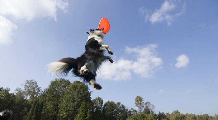 Lietajúci tanier pre psíkov
