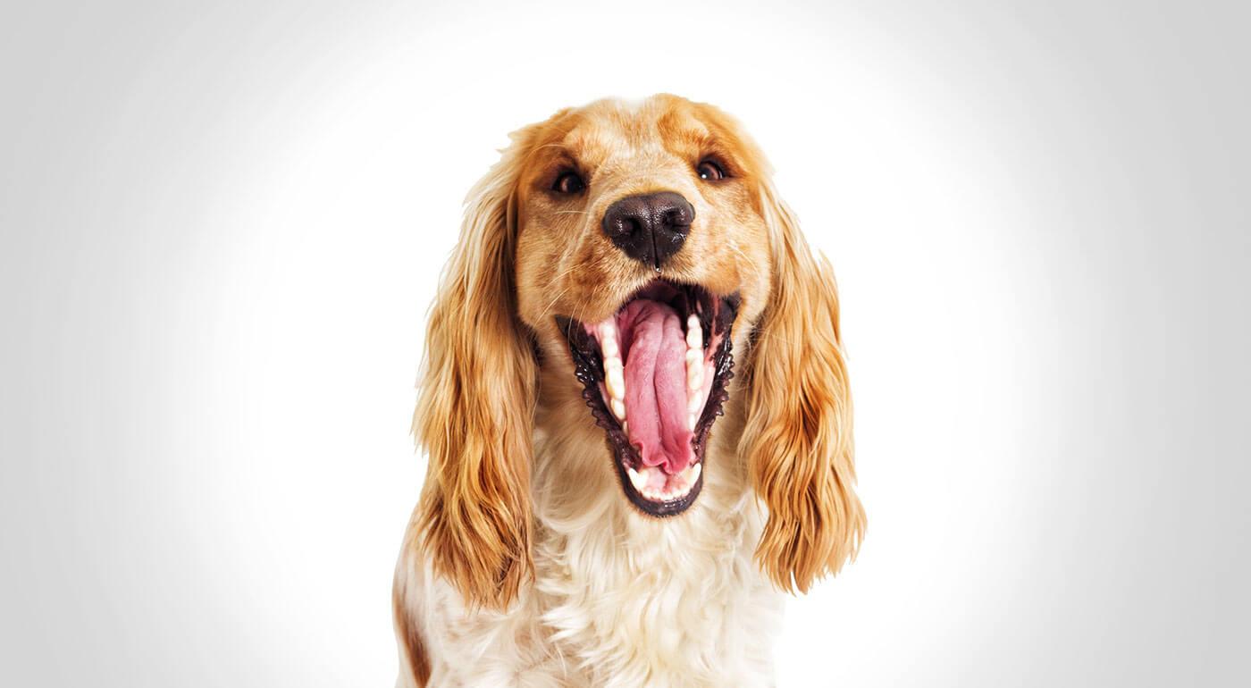Dentálny pamlsok pre psíkov Dental Meatsnax - sušené hovädzie mäso pre čisté zuby a zdravú srsť