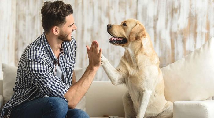 Žuvacie tablety pre psov