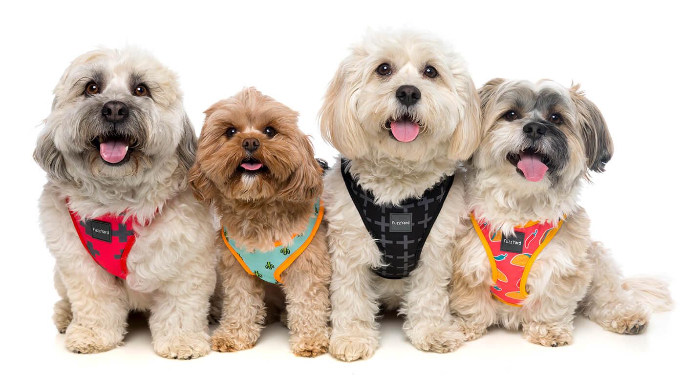 Postroje pre psov FuzzYard s jednoduchým zapínaním a originálnym dizajnom - výhradne iba u nás!