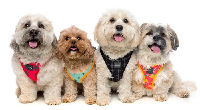 S nastaviteľným postrojom od FuzzYard bude váš psík v parku jednoducho neprehliadnuteľný! Výrazné vzory, pohodlné prevedenie a kvalitné materiály zaručia, že si spoločné venčenie užijete na maximum.