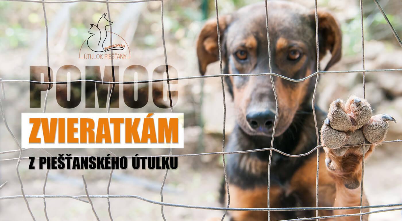 Pomôžte psíkom a mačičkám v Útulku Piešťany - venujte symbolické 1 € alebo balenie granúl