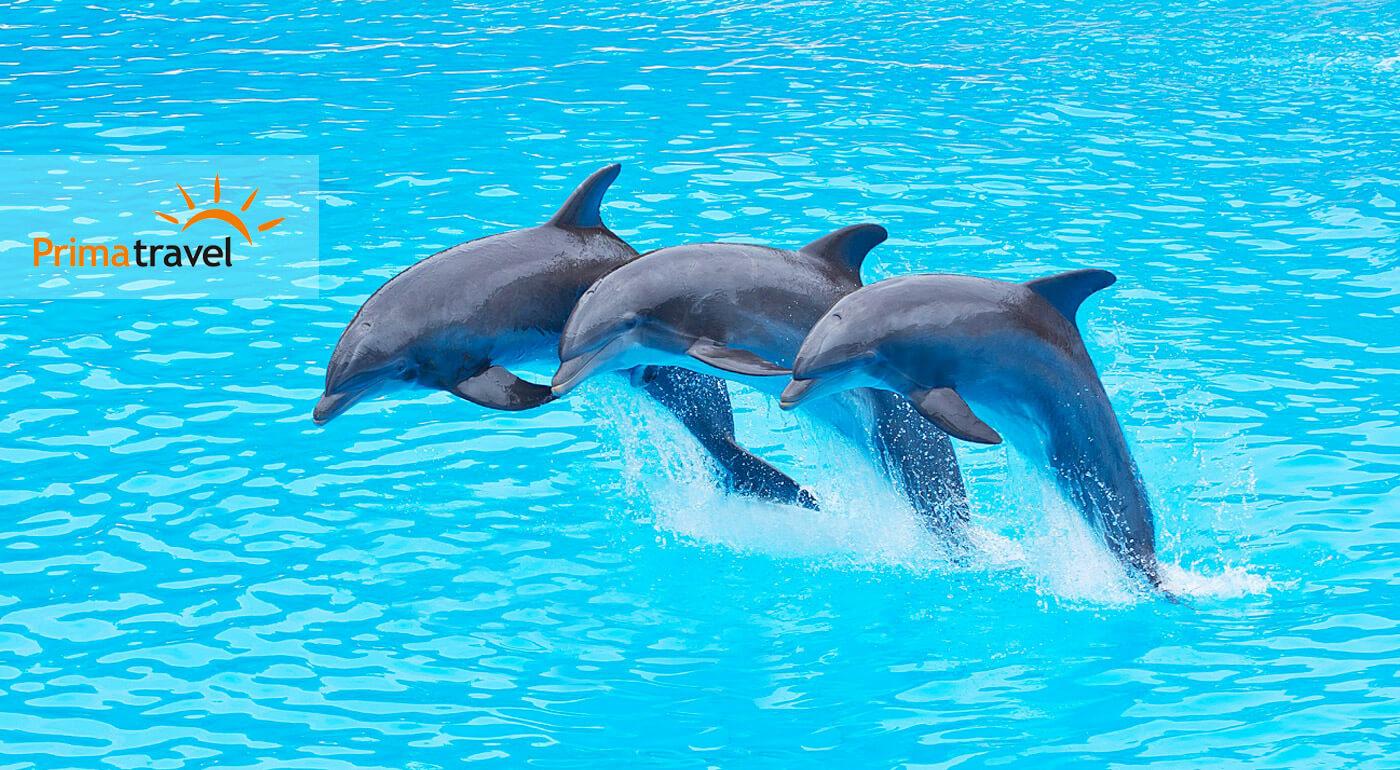 Delfinárium, úžasná show s delfínmi a návšteva ZOO v Norimbergu pre celú rodinu na 3-dňovom zájazde