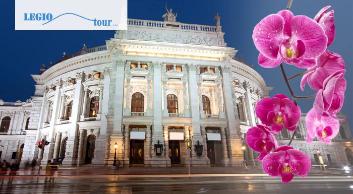Viedeň: Výstava orchideí a tillandsií