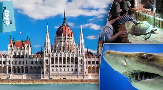 Pozrite si historické pamiatky v Budapešti a spoznajte tajomný podmorský život.