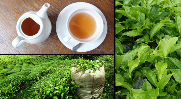 Ručne zbieraný ZELENÝ ČAJ z Vietnamu v 200 g balení. Nápoj pre dlhý a zdravý život!