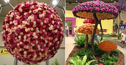 vystava kvetov