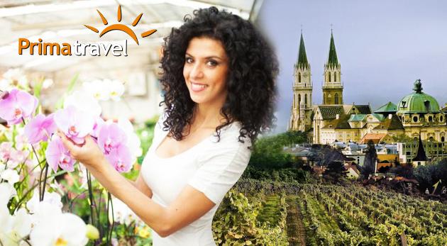 Fotka zľavy: Strávte krásny deň v spoločnosti nádherných kvetov, lahodného vína a objavte skvosty Klosterneuburgu. Zájazd do Rakúska len za 17,90 € vrátane dopravy a služieb sprievodcu.