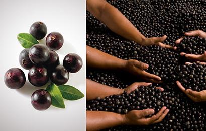 Výživové doplnky - Maqui berry alebo Africké mango