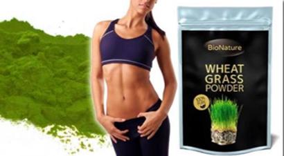 zelená mladá pšenica