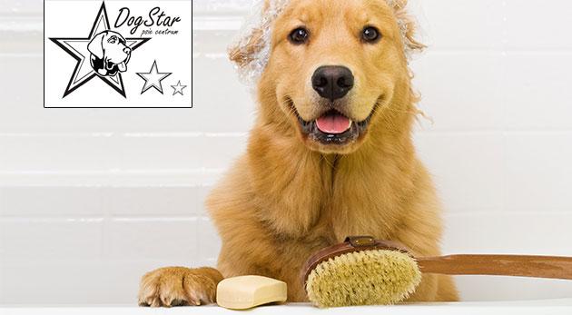 Wellness a strihanie pre psy v psom centre Dogstar - profesionálne služby pre vašich domácich miláčikov