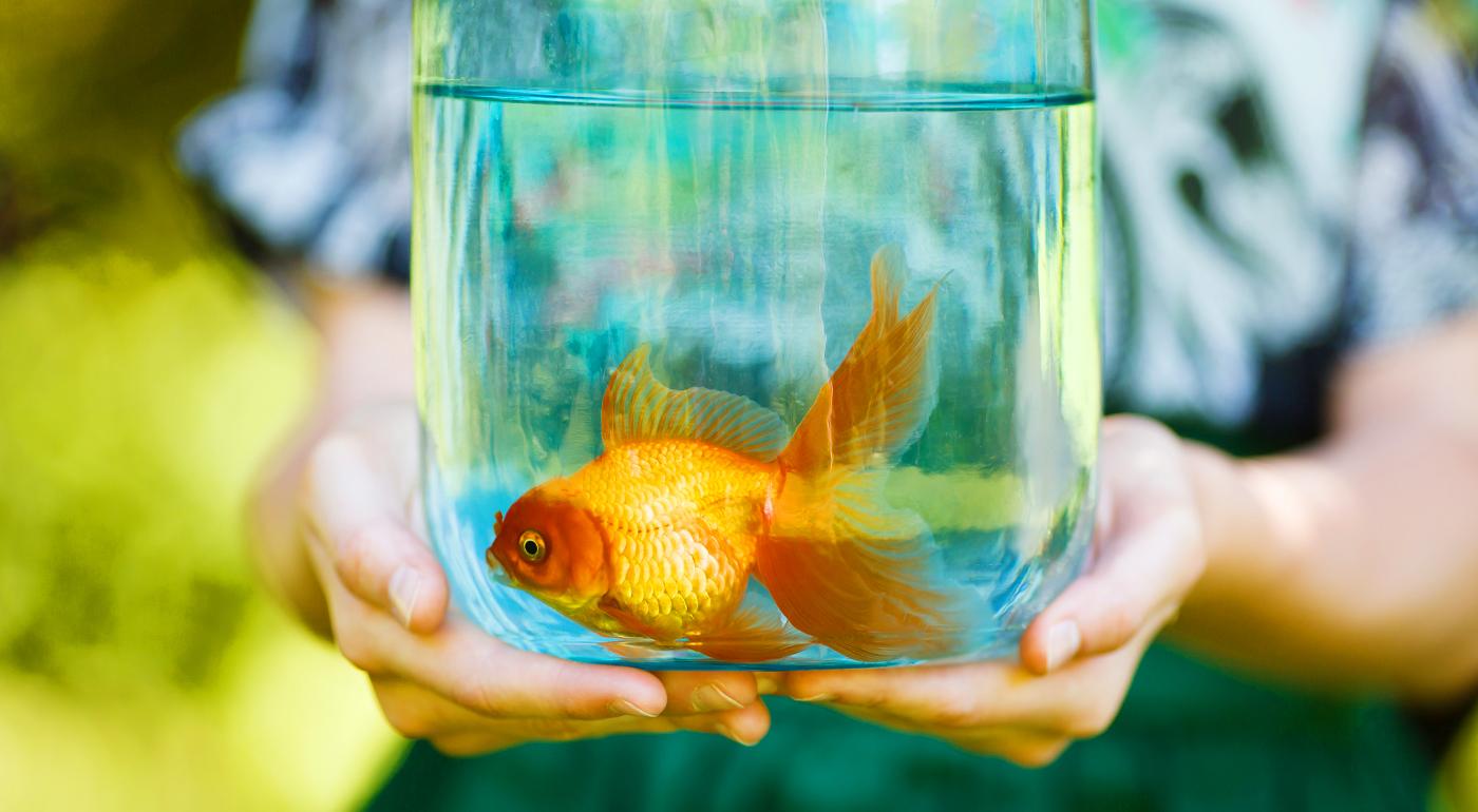 Vaše rybičky nemali nikdy čistejší domov vďaka samočistiacemu akváriu My Fun Fish, ktorého čistenie zvládnu aj deti.