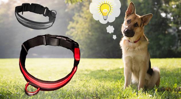 Praktický obojok pre psíka s LED diódami