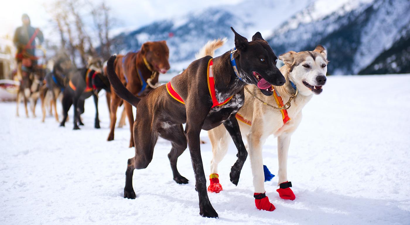 Rýchlo a zbesilo so psími záprahmi na Slovensku za super ceny!