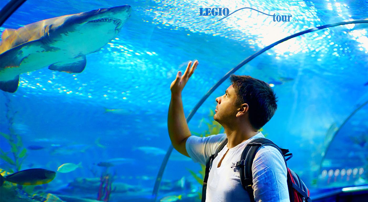 Zľava  Pozrite si najväčšie morské akvárium