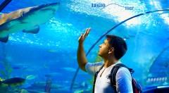 Zľava 45%: Pozrite si najväčšie morské akvárium v Strednej Európe - Tropicarium Oceanarium počas jednodňového zájazdu do Budapešti len za 19,50€ i s prehliadkou historického centra mesta.