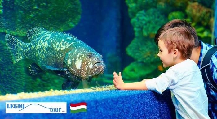 Fotka zľavy: Pozrite si najväčšie morské akvárium v Strednej Európe - Tropicarium Oceanarium počas jednodňového zájazdu do Budapešti len za 19,50€ i s prehliadkou historického centra mesta.