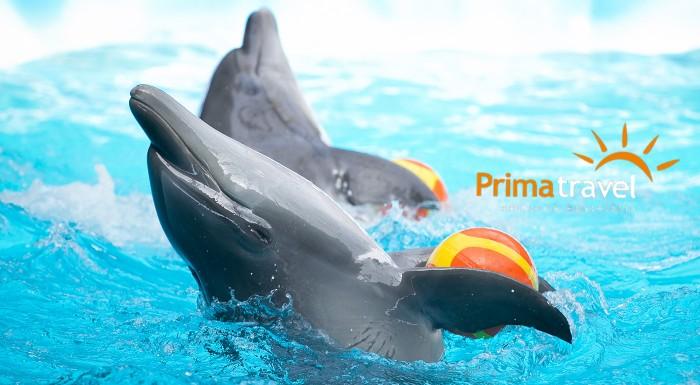 Fotka zľavy: Rozžiarte očká vašich detí aj tie svoje - poteší vás zájazd do delfinária, návšteva ZOO a atraktívna show s delfínmi v nemeckom Norimbergu len za 59 €.