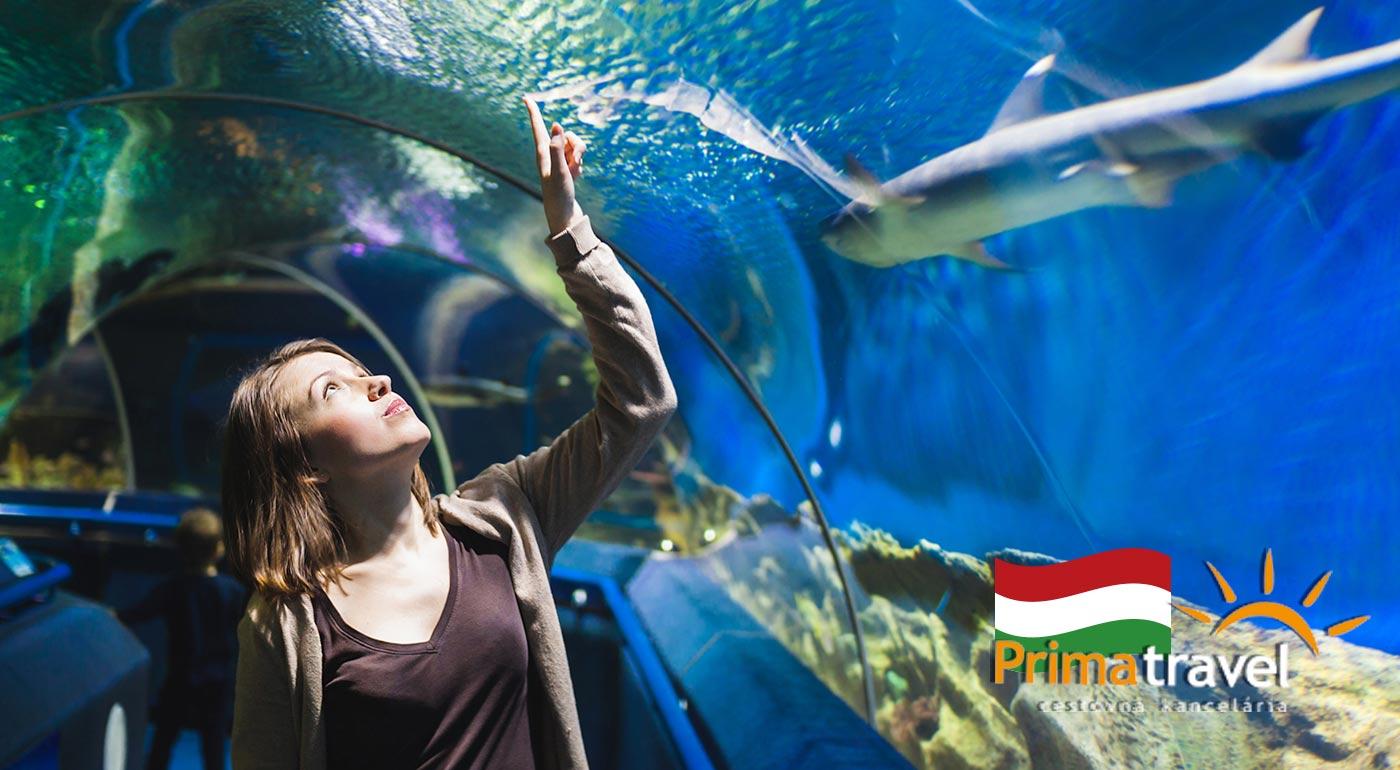 Fotka zľavy: Odhaľte krásy Budapešti a obdivujte krásu podmorského sveta v miestnom Tropikáriu. Navštívte metropolu Maďarska počas jednodňového poznávacieho zájazdu so sprievodcom.