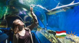 Zľava 24%: Odhaľte krásy Budapešti a obdivujte krásu podmorského sveta v miestnom Tropikáriu. Navštívte metropolu Maďarska počas jednodňového poznávacieho zájazdu so sprievodcom.