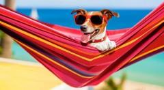 Zľava 33%: Viete čo budete robiť toto leto? My áno - celkom určite sa nepohnete z maximálne pohodlných hojdačiek. Vyberte si zo zaujímavých farieb a dajte vášmu oddychu nový impulz.