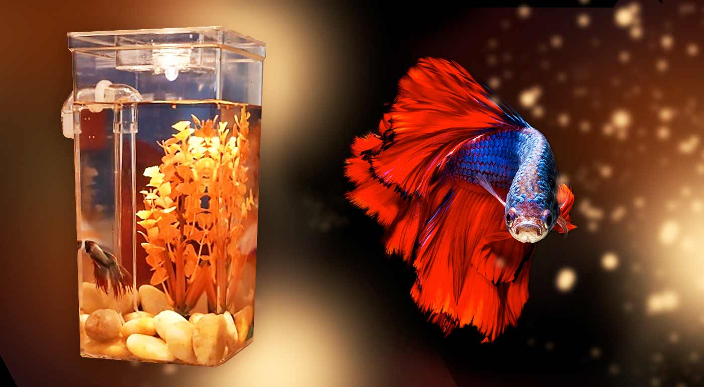 Samočistiace akvárium My Fun Fish pre deti a ich rybacích spoločníkov