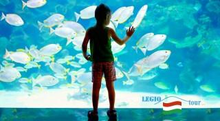 Zľava 44%: Navštívte najväčšie morské akvárium v Strednej Európe - Tropicarium Oceanarium počas jednodňového zájazdu do Budapešti aj s prehliadkou historického centra mesta.