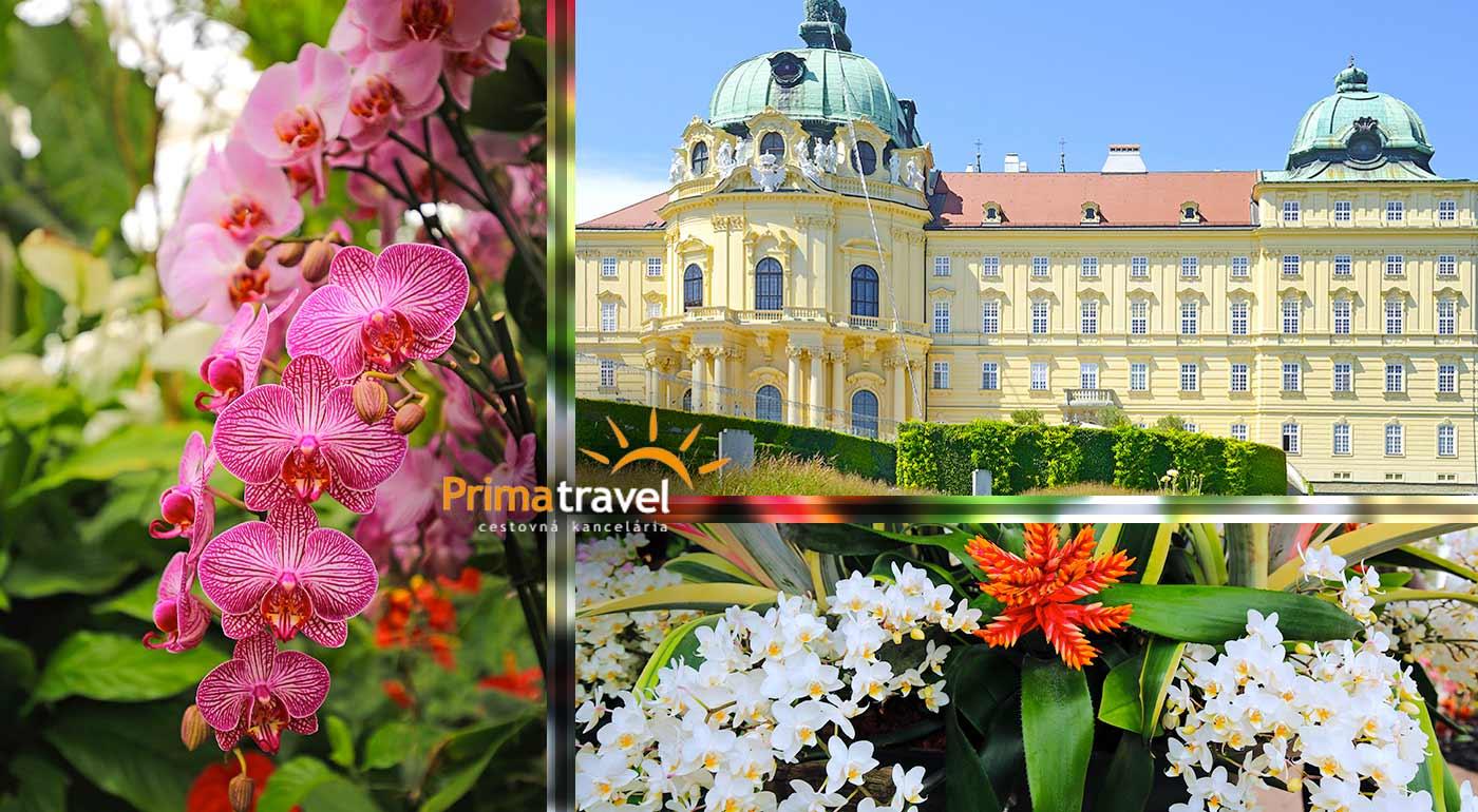 Fotka zľavy: Urobte si deň plný zážitkov na najväčšej výstave orchideí v Rakúsku. Ochutnáte aj lahodné víno a navštívite starobylý kláštor v Klosterneuburgu počas jednodňového zájazdu s CK Prima Travel.